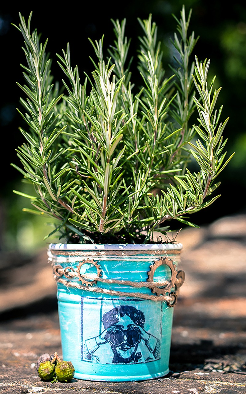 how to get rid of bugs in potted plants