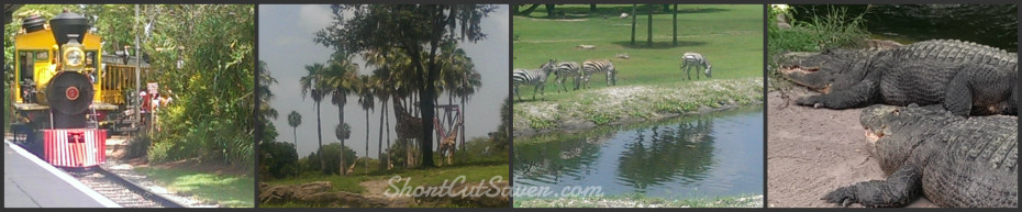 Busch Garden Animals