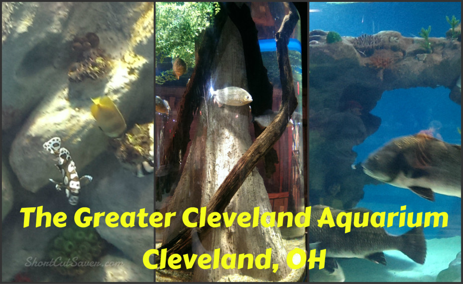 The Greater Cleveland Aquarium Cleveland Oh Everyday