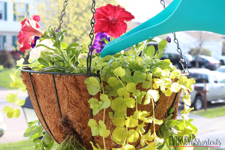 finished hanging basket