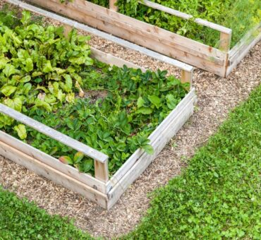 Raised Bed Gardening 101