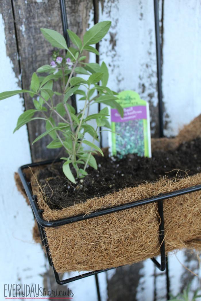 herb garden plants planted