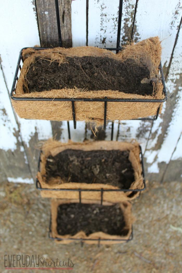 herb garden with dirt