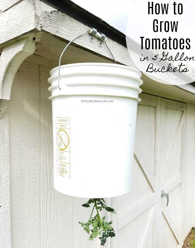 how-to-grow-tomatoes-in-5-gallon-buckets