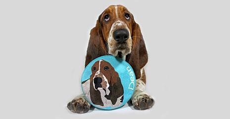 pride bites dog frisbee