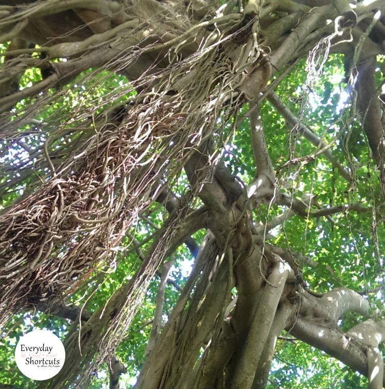 cypress-garden