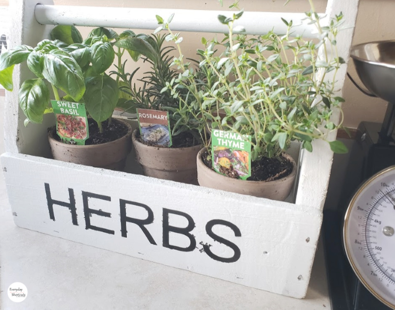 herbs-to-plant